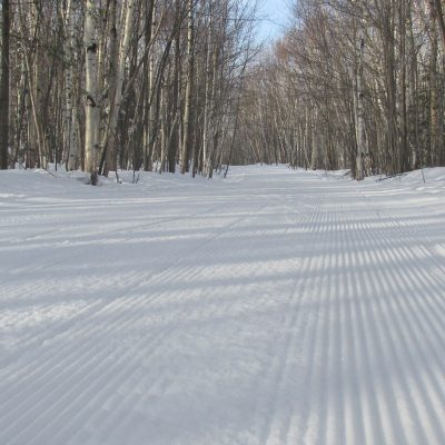 FSTC18_birch trail